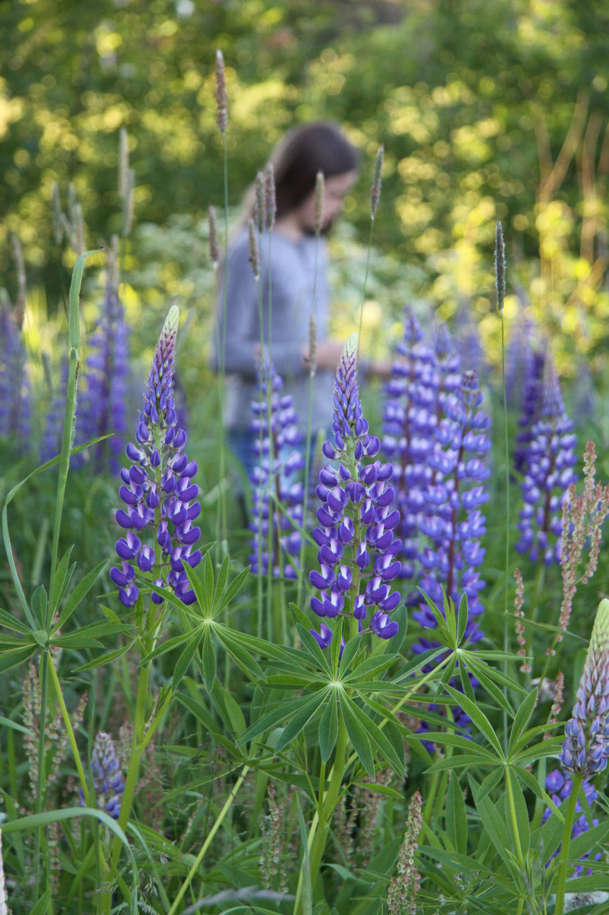 flower, growth, nature, purple, plant, field, real people, lavender, outdoors, one person, beauty in nature, day, lifestyles, fragility, leisure activity, freshness, flower head, people