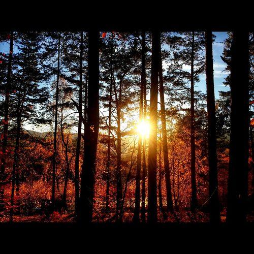 Autumn sunset and nature Sunset Sunset_collection Mircek Taking Photos Autumn Autumn Colors Autumn 2015 Chvalšiny Military Area First Eyeem Photo