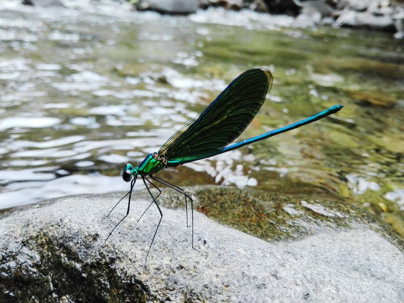 Beufly Dragonfly Nature Beauty Cute Animal Themes One Animal Insect Animals In The Wild Day Outdoors Nature Animal Wildlife Focus On Foreground Damselfly Close-up Beauty In Nature No People
