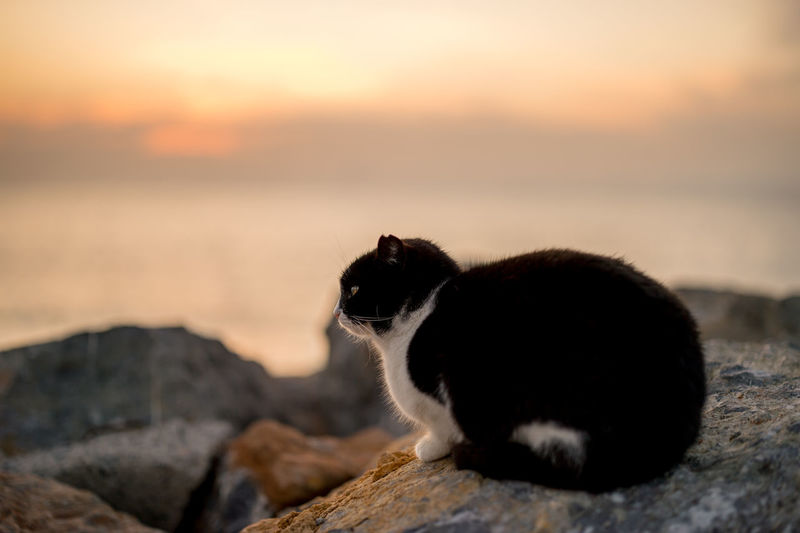 Close-up of cat on rock against sky during sunset