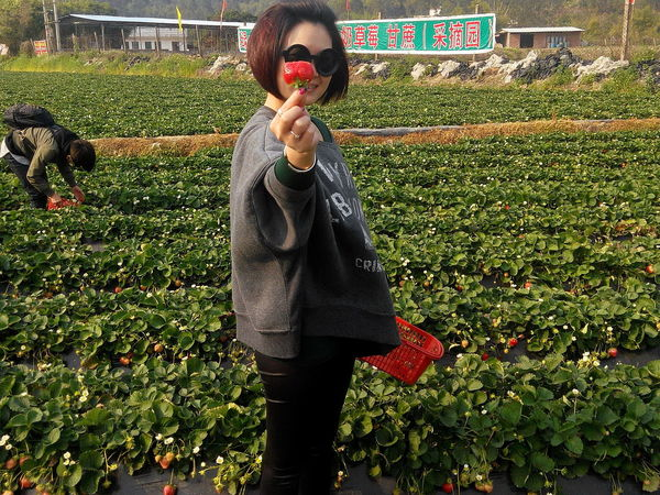 STRAWBERRY FARMS IN HUIZHOU Cool Weather Fun Fun Times Grass Green Color Nature Scenery Scenic View Strawberry Fields Strawberry Picking Strawberrys The Portraitist - 2016 EyeEm Awards The Photojournalist - 2016 EyeEm Awards The Street Photographer - 2016 EyeEm Awards The Great Outdoors With Adobe Girl Power