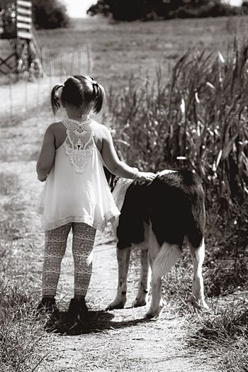 Girl Girl And Dog Dog Farm Life Farm Fall Sunlight Pets Instagood Instadaily Relaxing Lifestyles Sweet Togetherness Holding Outdoors Field Focus On Foreground Day Pampered Pets EyeEm Best Shots Black And White Lieblingsteil Long Goodbye
