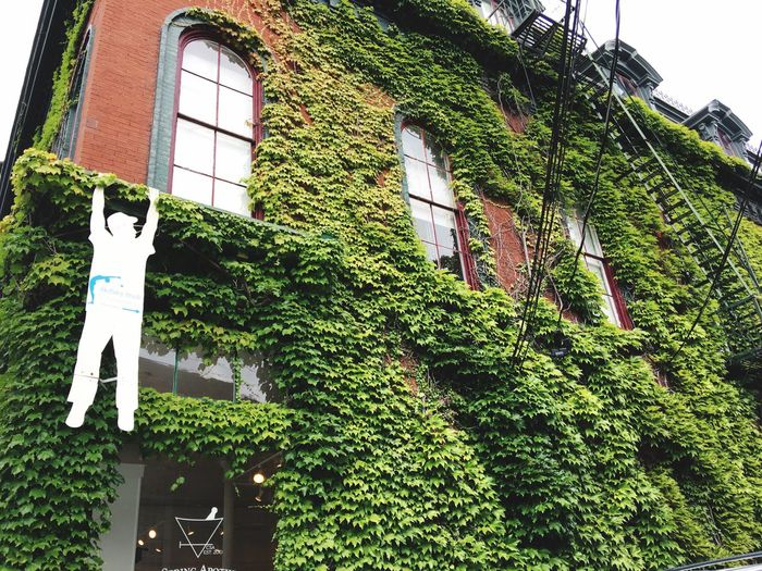 Low angle view of ivy growing on building