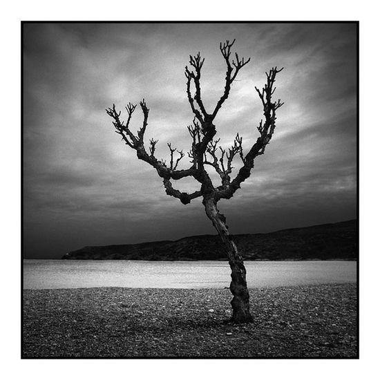 Dead Tree Blackandwhite