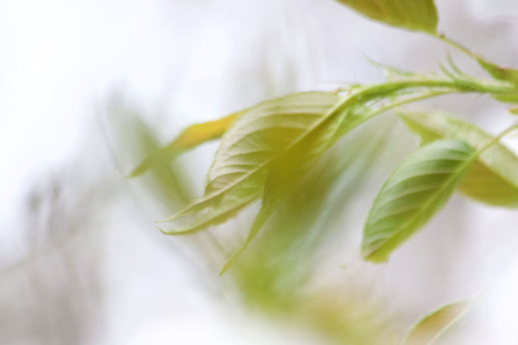Leaf Plant Part Close-up Freshness No People Green Color Nature Plant Selective Focus Group Of Objects Soft Focus Leaves Outdoors Minimal Impressionism Calm