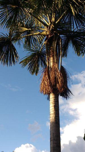 Buritizeiro, Amazon tree. EyeEmNewHere Palm Tree Tree Cloud - Sky Outdoors Nature Day