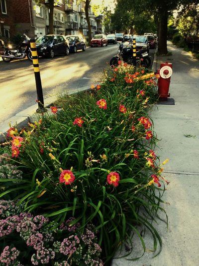 Plant Flower Transportation Motor Vehicle Car Mode Of Transportation City