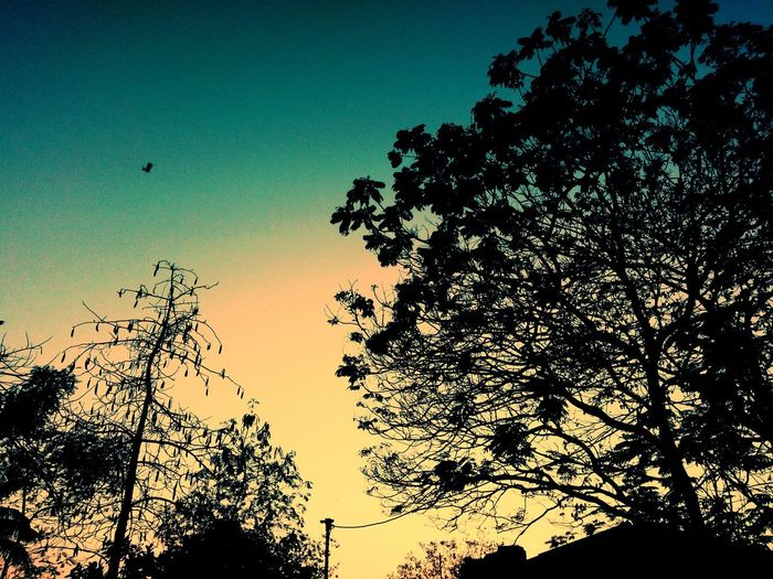 Coz beauty lies everywhere...U just have to look closely First Eyeem Photo Colour Your Horizn