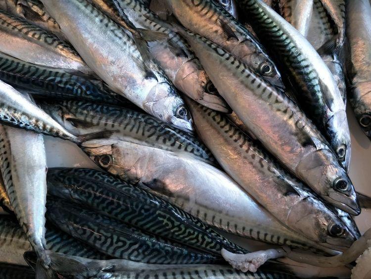 fish market Raw Fish Market Fresh Market Pesce Seafood Fish Raw Food Food And Drink Fish Market Indoors  Healthy Eating