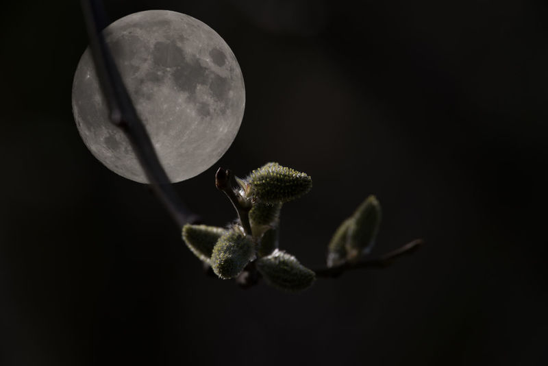 Night and day with full moon in second focus Beauty In Nature Black Background Close-up Day Montage Moon Mountain Nature Night Nightphotography No People Outdoors Twig Two Focusses Unrealistic