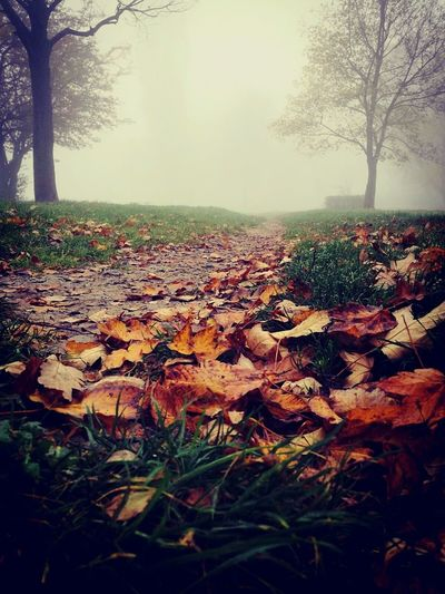Fog In The Morning Autumn Tree Grass Nature Leaf Beauty In Nature Outdoors Morning Fog No People End Of The World