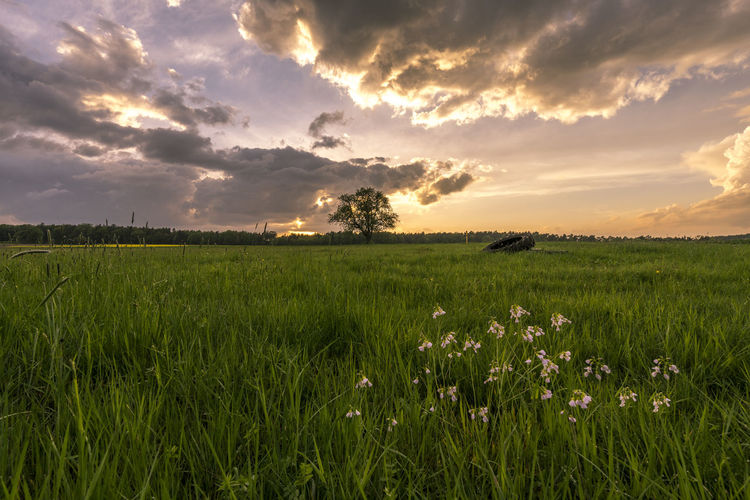 EyeEm Best Shots EyeEm Nature Lover EyeEm Gallery Agriculture Beauty In Nature Cloud - Sky Environment Eyeemgermany Field Flower Green Color Growth Idyllic Land Landscape Nature No People Outdoors Plant Rural Scene Scenics - Nature Sky Sunset Tranquil Scene Tranquility