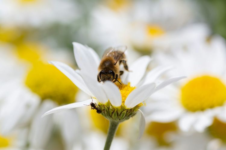 Hide and seek, bee versus ant