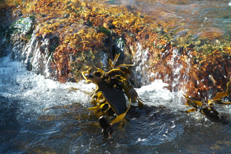 Nature Seaweed Ocean Outdoors Power In Nature Rocks Running Water Sea Sea Plant Splashing Water Over Rocks Wave Waves Crashing Waves, Ocean, Nature
