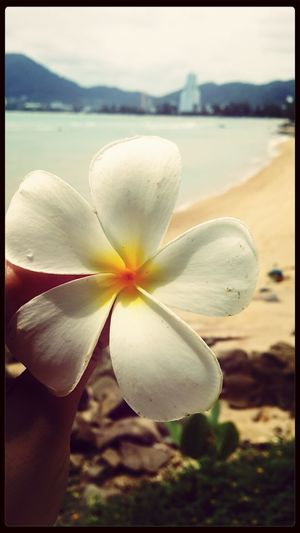 The flower thaf blooms in adversity is the mist rare and beautiful of all