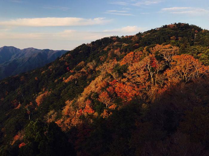 Mount Homan Mountain Full Of Colours Mixture Of Colours Colour Full Wintet Peek Mount Summit
