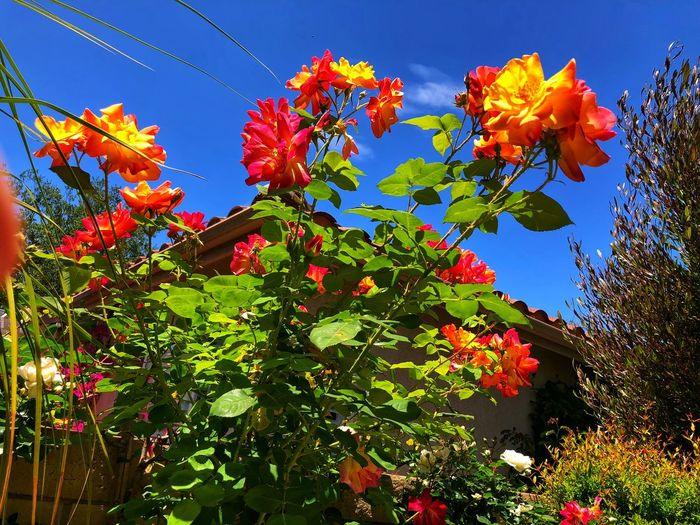 Low angle view of red flowering plants against sky