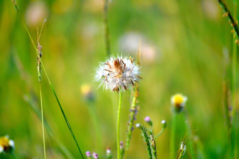 Flower Head Flower Insect Uncultivated Social Issues Wildflower Close-up Plant Thistle Pollination Symbiotic Relationship Buzzing Eastern Purple Coneflower Pollen Coneflower Animal Antenna Bumblebee Honey Bee Bee Spider Arachnid Dandelion Spider Web Butterfly - Insect Flowering Plant Dandelion Seed Arthropod In Bloom