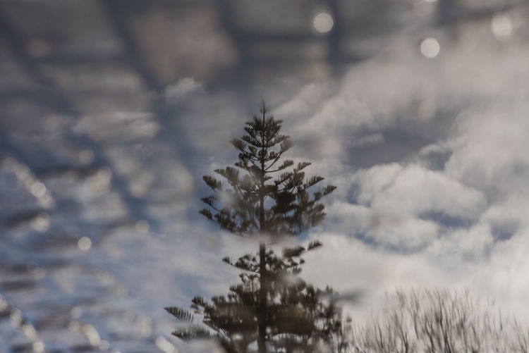 Ways Of Seeing Cloud Reflection Shades Of Winter Puddle Sky Tree Upside Down Water Visual Creativity The Street Photographer - 2018 EyeEm Awards The Traveler - 2018 EyeEm Awards #urbanana: The Urban Playground A New Perspective On Life Capture Tomorrow