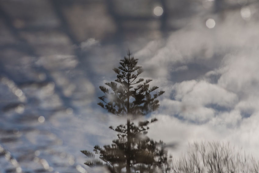 Cloud Reflection Shades Of Winter Puddle Sky Tree Upside Down Water