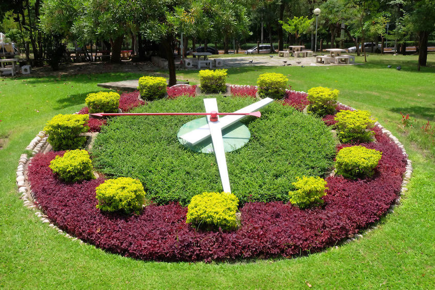 plant clock in garden Beauty In Nature Bloom Blossom Clock Day Flora Flower Formal Garden Garden Grass Green Greensward Landscape Lawn Nature Outdoors Park Plant Plant Clock Tree