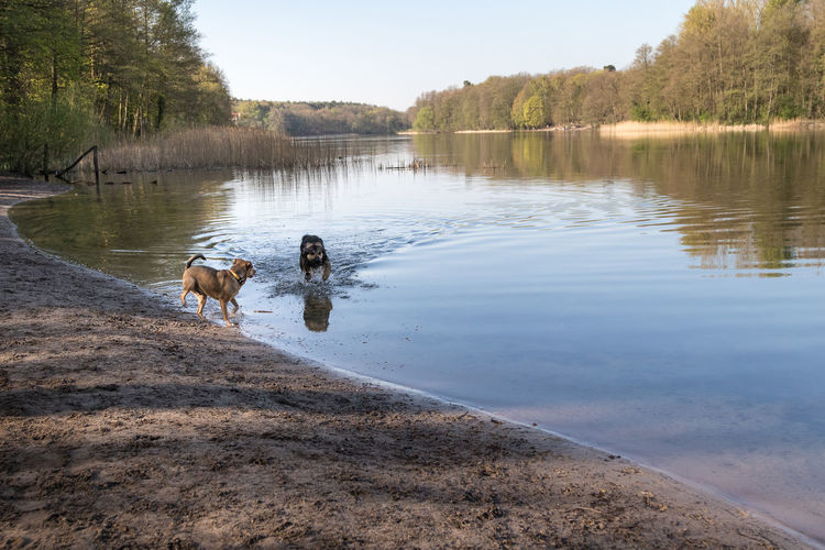 View of a dog in lake