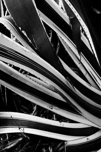 Cactus Cactus Flower Landscape Photography Landscape_Collection Nature Nature Photograhy Nature Photography Nikon Nikon Photography B&w B&w Photography Black And White Blackandwhite Cactus Collection Cactus Lovers Landscape Landscape_photography Landscapes Natur Nature Photographer Nature_collection Naturelovers Naturephotography Nikonphotographer Nikonphotography EyeEmNewHere