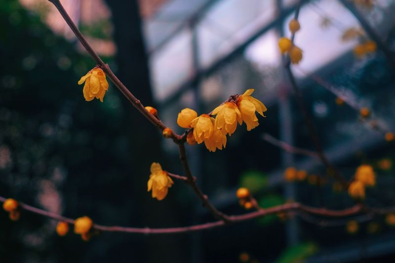 Plum Blossom Plant Focus On Foreground Tree Branch Nature Beauty In Nature Close-up Outdoors Change Twig Tranquility Selective Focus Vulnerability  Plant Part Autumn Fragility Growth Leaf Day No People