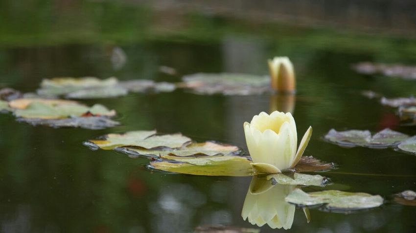 Alhambra Grenada Grenade Nenuphar Road Trip Fleur Flower SPAIN España Espagne 🇪🇸