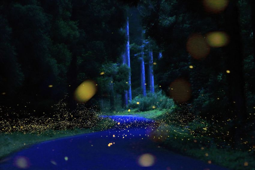 No People Water Night Outdoors Nature Mountain Tree Reaf Green Color Firefly 蛍 比較明合成 Natural Summer Wood Beauty In Nature Close-up Illumination Night Forest Road Forest WoodLand Synthesis
