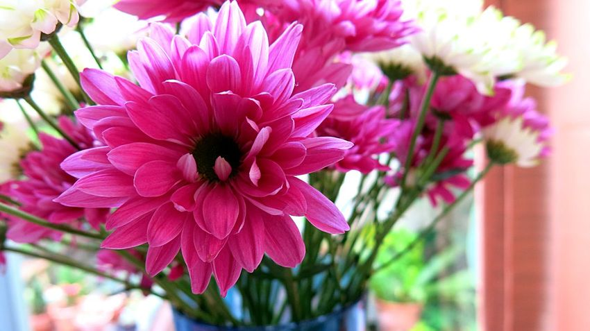 Love Decoration Pink Flower Flower Petal Beauty In Nature Nature Flower Head Plant Growth Pink Color Close-up