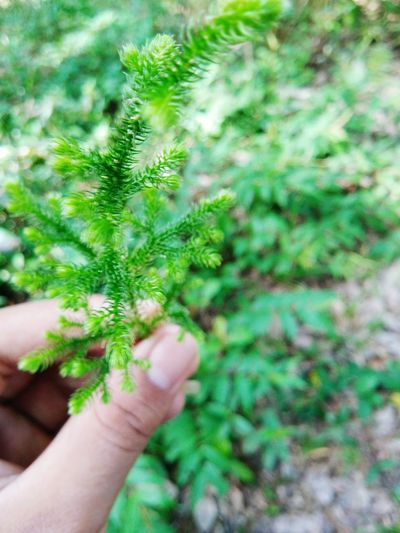 Human Hand Holding Women Tree Close-up Plant Green Color