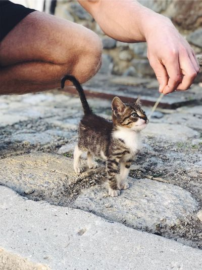 Kitty cat Mjao Naw Cutie Adorable Cat  Adorable Animal Photography Animal Cute Cats Cute Pets Kitty Mammal Pets Domestic Domestic Animals One Animal Human Hand Vertebrate Hand Cat Day Nature First Eyeem Photo EyeEmNewHere Domestic Cat People Young Animal Kitten Small Outdoors Selective Focus
