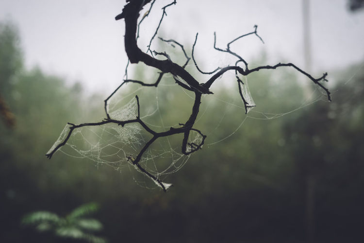 spiderweb with dew Plant No People Tree Nature Focus On Foreground Close-up Day Beauty In Nature Outdoors Growth Fragility Tranquility Twig Branch Vulnerability  Bare Tree Dry Selective Focus Protection Plant Part Dead Plant