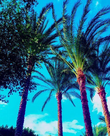 Nature TreePorn Trees Forever Loving Green Blue Sky Forever My Favorite Sight