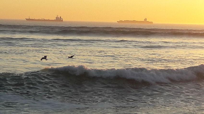 Sunset Sea Silhouette Beach Wave Horizon Over Water Bird Seagull Water Nature Blaauwberg Beach South Africa Table Mountain Seagulls Feeding Seagulls And Sea Animals In The Wild Animal Wildlife Scenics Mountain Range