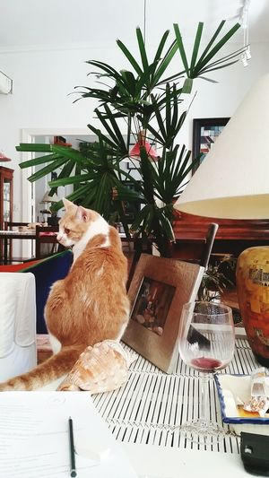 Cat Cats Of EyeEm Archival Indoors Home Interior No People Mammal Day First Eyeem Photo