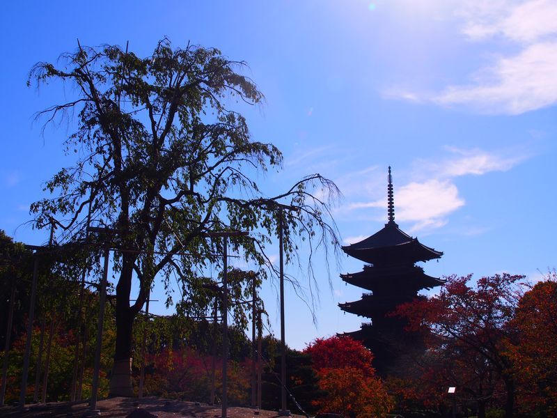 京都 秋 東寺 教王護国寺 五重塔 Kyoto Autumn Toji Tojitemple Five-story Pagoda