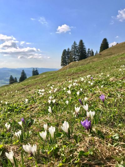 Frühlingszeit Spring Frühlingszeit Plant Flowering Plant Beauty In Nature Flower Sky Growth Nature Land Tranquility Vulnerability  Cloud - Sky Fragility Scenics - Nature Freshness Tranquil Scene No People Sunlight Day Field Water