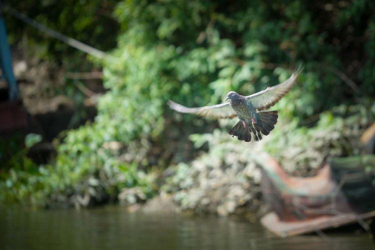 #bird TakeOff