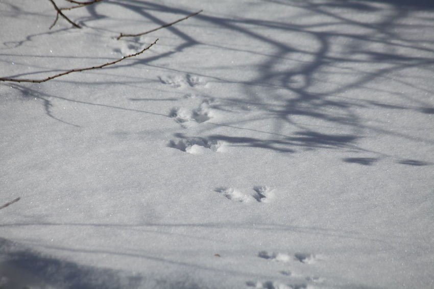 Animal Themes Beauty In Nature Bird Close-up Cold Temperature Day Nature No People Outdoors Paw Print Snow Winter
