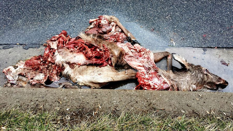 High Angle View Of Dead Deer On Road