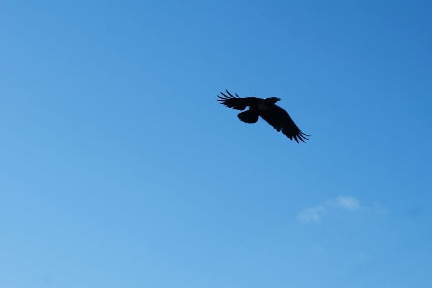 Flying high... First Eyeem Photo Blue SkyEagle . Showcase : January