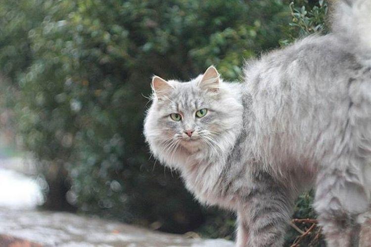 Cat животные бездомныеживотные
