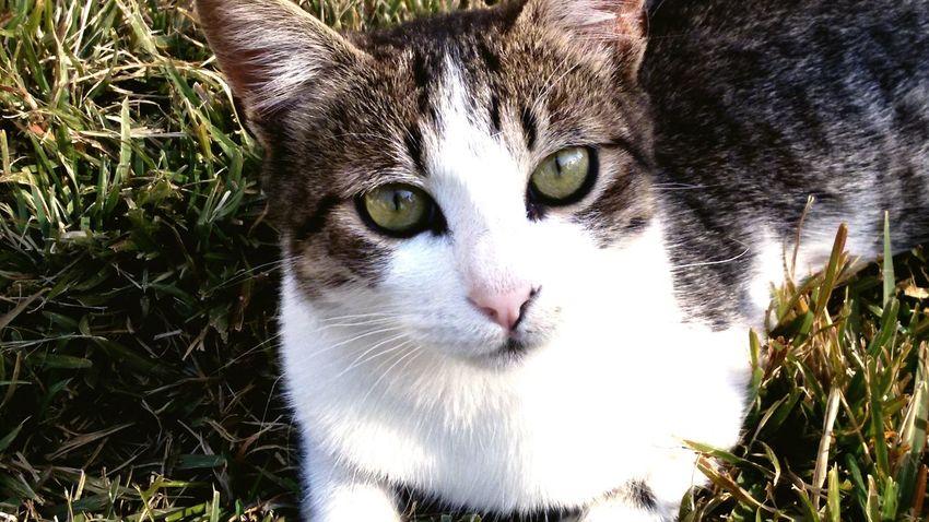 Cuteness Peace ✌ Lovelovelove Kiss :* you little sweet cat Miao:3