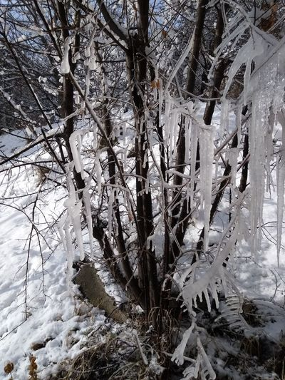 Frozen trees on snow covered land