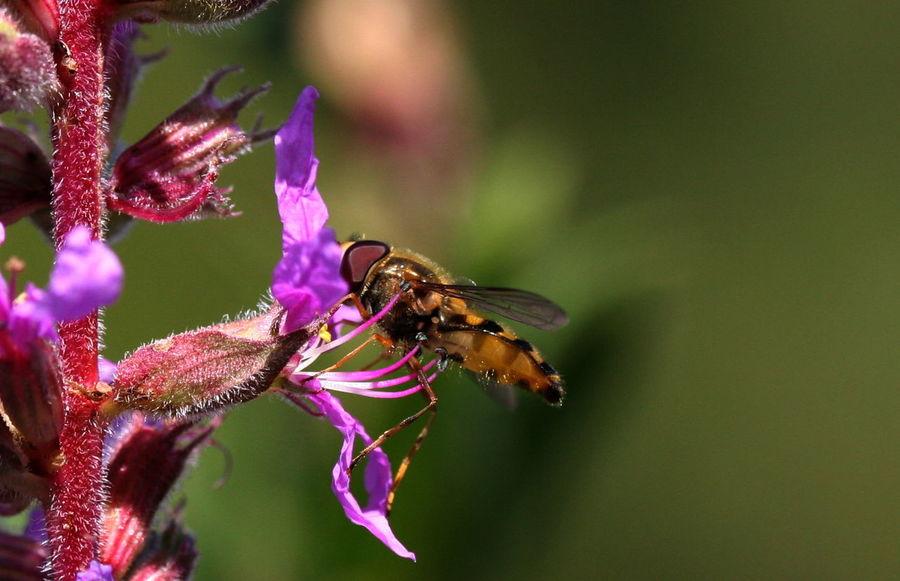 Flowers Macro Bees