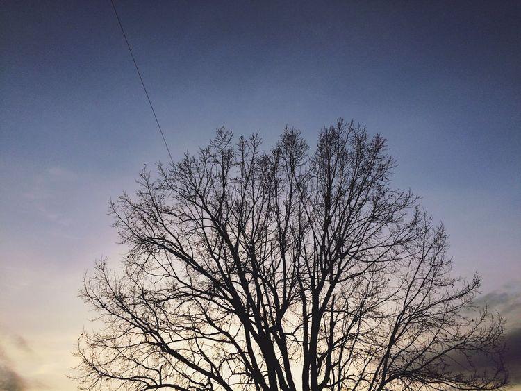 ある日の夕暮れ… 空 夕焼け 夕日 黄昏 夕暮れ 木 シルエット 春