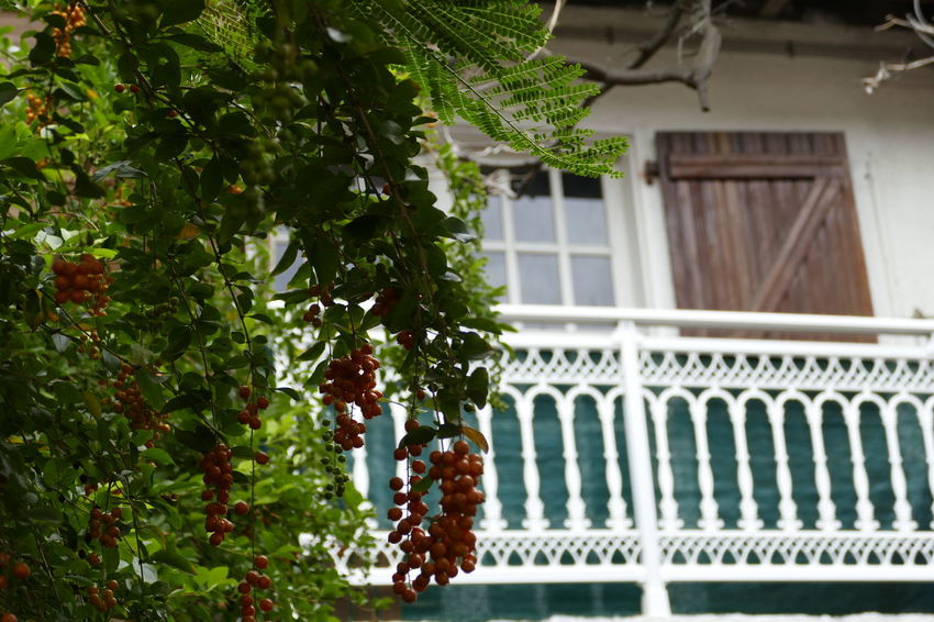 Architecture Building Exterior Built Structure Day Food Fruit Growth Hanging Leaf Nature No People Outdoors Tree Window Box