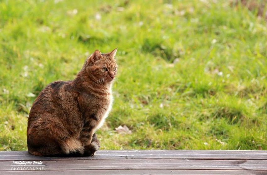#chat #felin #photographie #photography #Sologne
